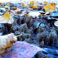 Первый лед :: оксана