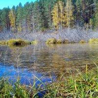 Осеннее болото :: оксана