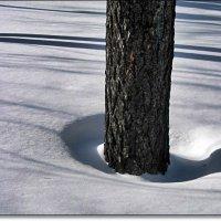 Тени зимы :: muh5257
