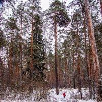 Величество природы... :: Дмитрий Янтарев