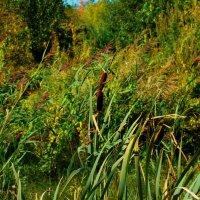 рогоз среди трав :: linnud