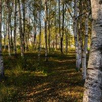 Осенний парк :: Сергей Бойко