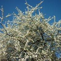 так хочется весны! :: Oxi --