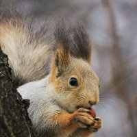 А я сижу- орешки грызу............. :: Игорь Егоров
