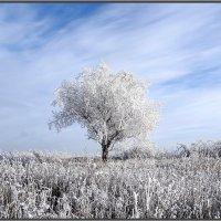 Здравствуй, гостья-зима!!!!!! :: Ирина Голубева