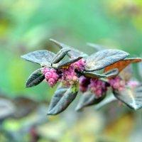Декабрьский цветок :: Ольга Голубева