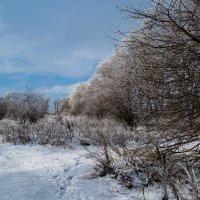 Зимний сад :: Наталья Шевякова