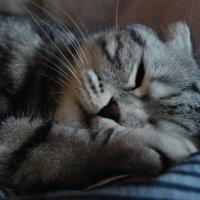 Сладкий сон. :: Lara