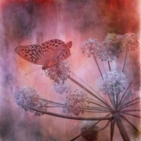 бабочка :: Алексей Карташев
