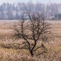 Один в поле :: Дмитрий