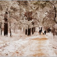 Морозная прогулка :: Svetlana Kravchenko