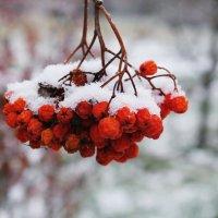 Первое морозное утро :: Нина Каменева