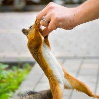 Отдай орех, а то руку сломаю! :: Alex Bush