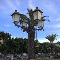 Ночной страж днем тоже прекрасен :: Светлана marokkanka
