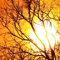 Sun :: Алексей Петров