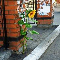 Городские цветы или жажда жизни. :: Владимир Михайлович Дадочкин