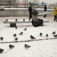 Голуби на снегу :: Александра Гай