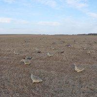 Охота на гусей. :: Андрей Синицын