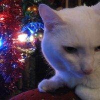 Хоть бы мне подарок положили под елку... :: Вера Андреева
