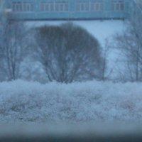 Снежок :: Настя Шахова