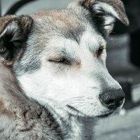 Бездомный. :: Елена Багрий