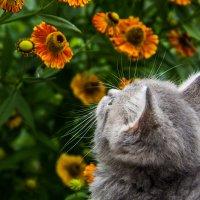 Кошка Нюша :: Дмитрий