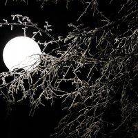 Брест, зима :: Vadzim Zycharby