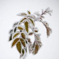 В объятиях зимы :: Иван Сагиров