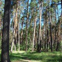 Свет и тени в лесу :: Александр Буянов