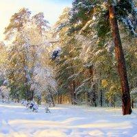 солнечная нежность к зимнему лесу... :: Галина Филоросс