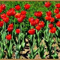 Городские цветы (11). :: Владимир Валов