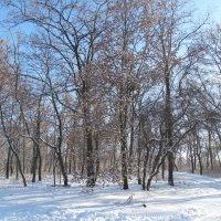 Зимний парк...2 :: Тамара (st.tamara)