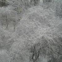 Зима :: Яна Чепик