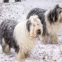 девочки в снегопад :: Лариса Батурова