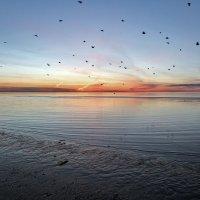 Северодвинск. Послезакатный перелёт ворон с моря на городские квартиры :: Владимир Шибинский
