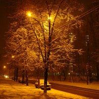 DSC09442 - В Москве - первый настоящий снег за эту зиму :: Андрей Лукьянов
