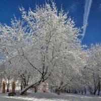 Настоящая зима :: Алексей Кошелев