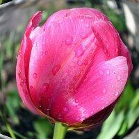 Воспоминание о весне :: Александр Резуненко