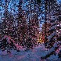 Академгородок. Зимняя панорама. Подсвечено справа неоновой рекламой :-) 12.12.2014. :: Vadim Piottukh