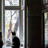 кошкина осень... :: Евгений Шейнин