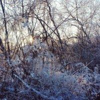Зимние узоры :: Надежда Петрова