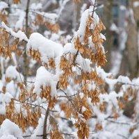 Пришла зима... :: Геннадий Александрович