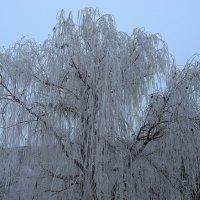 О зиме.. :: Natali