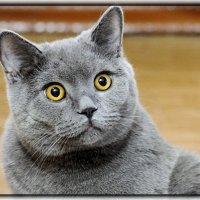 Шо Вы говорите??!!-))))) :: Светлана Кажинская