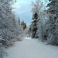 Выпал снег... :: Марат Шарипов