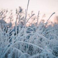 Снег :: Юлия Беликова