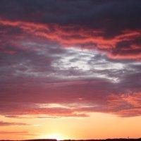 буйство красок :: вера Верхозина