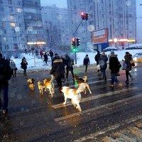 Все бегут на работу :: Светлана Марасанова