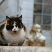cat :: Екатерина Abolmasova