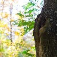 strain tree :: Vorel Moldovanu